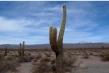 720px-cactus.jpg