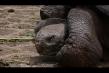 720cpx-tortoise.jpg