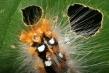 720px-caterpillar.jpg