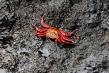 720px-crab.jpg