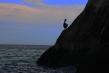 720px-pelican.jpg